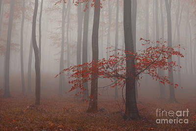 Photograph - Red Darkness by Bernadett Pusztai