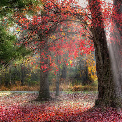 Autumn In New England Photograph - Red Dawn Square by Bill Wakeley