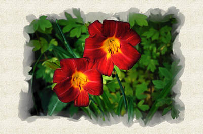Photograph - Red Daylillies by Thomas  Jarvais