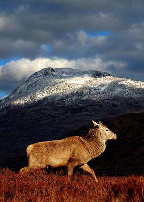 Photograph - Red Deer At Torridon by Gavin Macrae