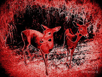 Photograph - Red Deer by Ed Weidman