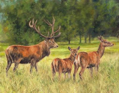 Stag Painting - Red Deer Family by David Stribbling