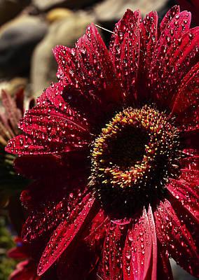 Red Dew Art Print by Joe Schofield