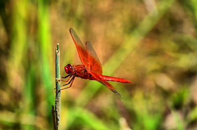 Photograph - Red Dragon Dreams by Spencer Hughes