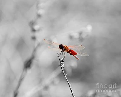 Dragon Fly Digital Art - Red Dragon - Selective Color by Al Powell Photography USA