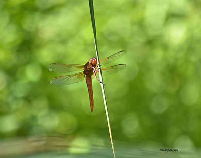 Photograph - Red Dragonfly by Allen Sheffield