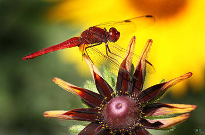 Red Dragonfly Art Print by Martina  Rathgens