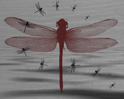 Digital Art - Red Dragonfly by Teri Schuster