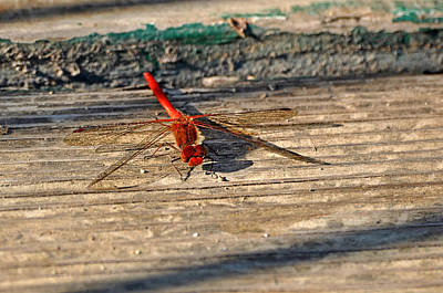 Photograph - Red Dragonfly by Valerie Garner