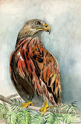 Animals Paintings - Red Eagle by Genevieve Esson