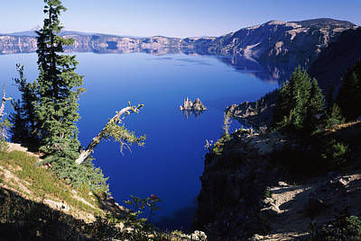 Crater Lake View Photograph - Red Elderberry Sambucus Racemosa by Panoramic Images