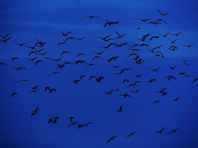 Birds In Flight At Night Photograph - Red Eye Flight by Todd Sherlock