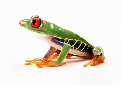 Peeper Painting - Red-eye Tree Frog 4 by Lanjee Chee
