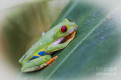 Red Eyed Frog Art Print by Patricia Hofmeester
