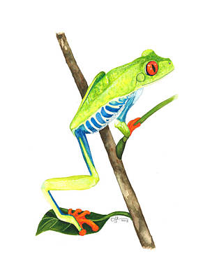 Painting - Red-eyed Treefrog From La Selva by Cindy Hitchcock