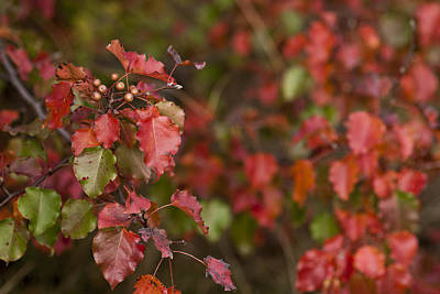 Photograph - Red Fall by Lisa Missenda