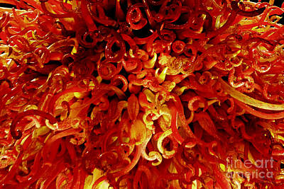 Photograph - Red Fantasy by Olga Hamilton