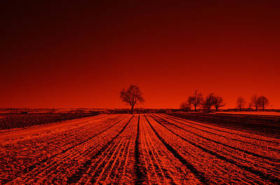 Photograph - Red Farm Fields by Miguel Winterpacht