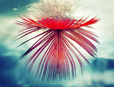 Red Feather Original