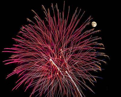 Photograph - Red Featherduster - Fireworks And Moon by Penny Lisowski