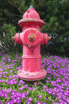 Fine Dining - Red Fire Hydrant by Jit Lim