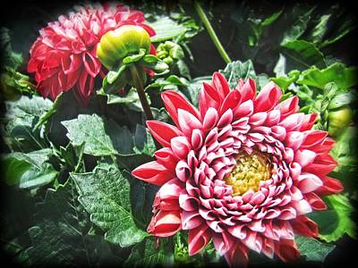 Photograph - Red Floral by Alice Gipson