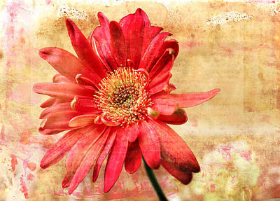 Digital Art - Red Flower 2 by Helene U Taylor