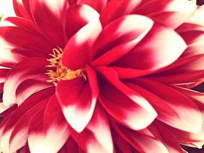 Red Flower Art Print by Beril Sirmacek