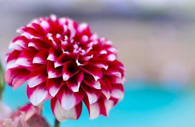 Red Flower Original