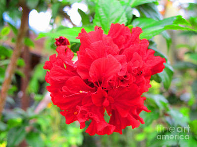 Art Print featuring the photograph Red Flower by Sergey Lukashin