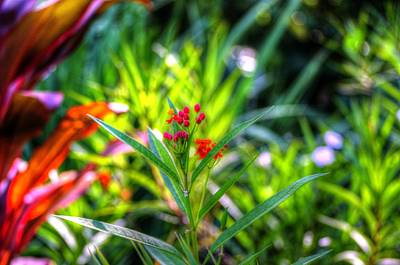 Photograph - Red Flowers 2 by Richard Zentner