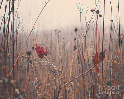 Wisconsin Photograph - Red Flowers In The Winter by Maren Misner
