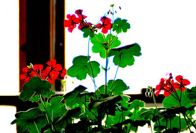 Photograph - Red Flowers In Window by John Brink