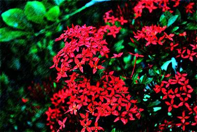 Photograph - Red Flowers by Richard Zentner