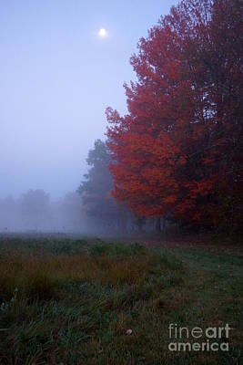 Photograph - Red Foliage Foggy Field by Kerri Mortenson