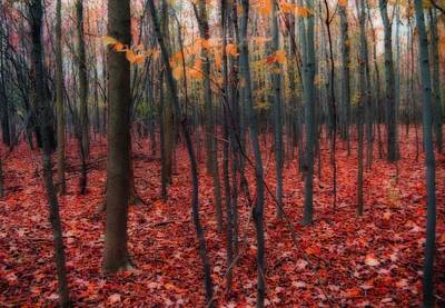 With Red. Photograph - Red Forest by Gothicrow Images