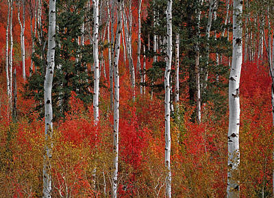 Fall Photograph - Red Forest by Leland D Howard