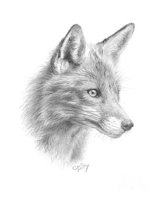 Drawing - Red Fox by Chris Mosley