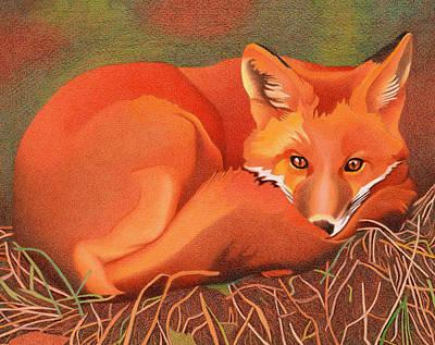 Red Fox Art Print by Dan Miller