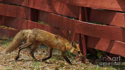 Spot Of Tea - Red Fox by Evelyn Hill