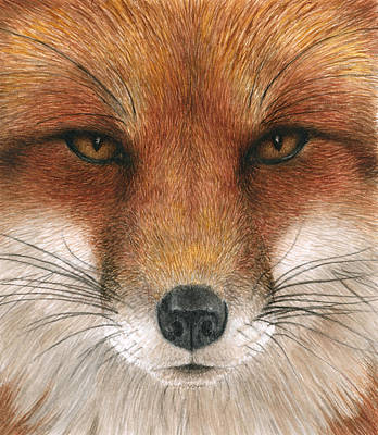 Red Fox Painting - Red Fox Gaze by Pat Erickson
