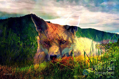 Photograph - Red Fox In The Wilderness by Annie Zeno