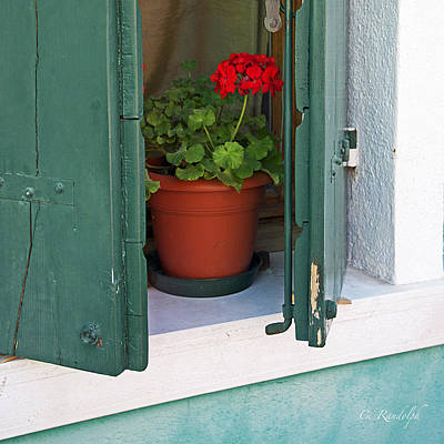 Photograph - Red Geranium by Cheri Randolph