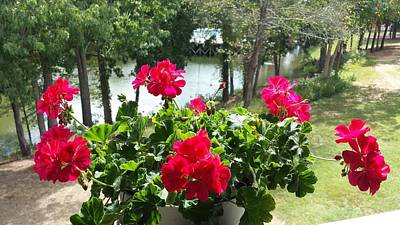 Lakeview Photograph - Red Geranium Lakeview by Kenny Glover