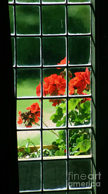 Red Geranium Through Leaded Window Art Print