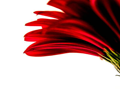 Photograph - Red Gerbena #2 by Cindi Castro