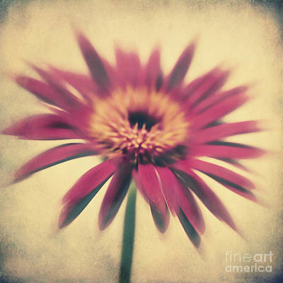 Vintage Flowers Photograph - Red Gerbera by Angela Doelling AD DESIGN Photo and PhotoArt