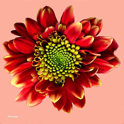 Painting - Red Gerbera Daisy Painting by Bob and Nadine Johnston