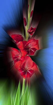 Photograph - Red Gladiola by Mark Greenberg