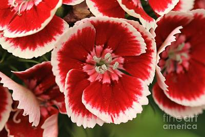 Red Glory All Profits Go To Hospice Of The Calumet Area Art Print